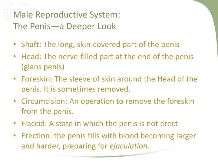 PPT - Human Reproduction: Reproductive Anatomy PowerPoint ...