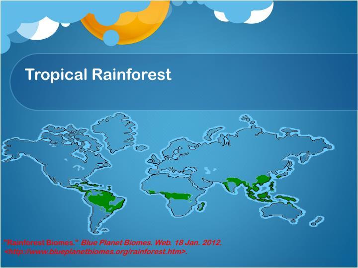 Tropical rainforest1