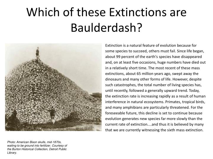 which of these extinctions are baulderdash n.