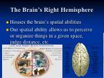 the brain s right hemisphere