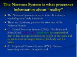 the nervous system is what processes information about reality