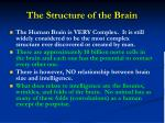 the structure of the brain1