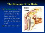 the structure of the brain4