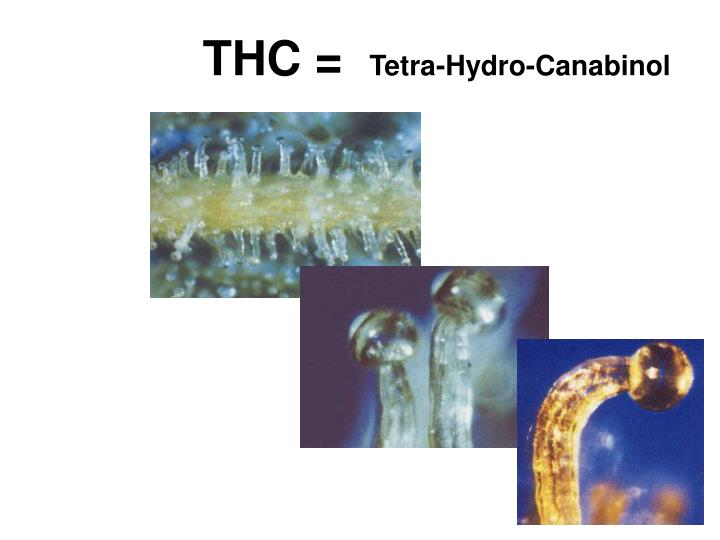 THC =