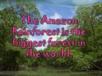 the amazon rainforest is the biggest forest in the world
