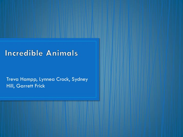 incredible animals n.