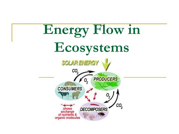 Energy flow in ecosystem how does energy flow in an ecosystem? How.