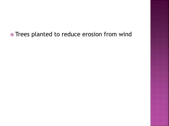 Trees planted to reduce erosion from wind