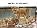 mother with lion cubs