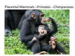 placental mammals primates chimpanzees