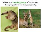 there are 3 main groups of mammals these groups differ in how their young develop
