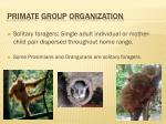 primate group organization