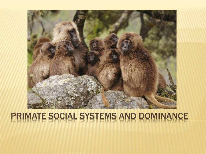 primate social systems and dominance n.