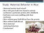 study maternal behavior in mice