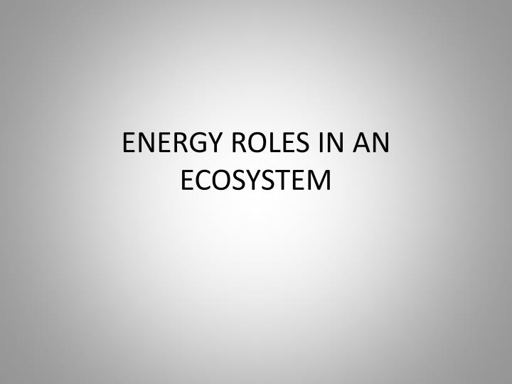 energy roles in an ecosystem n.
