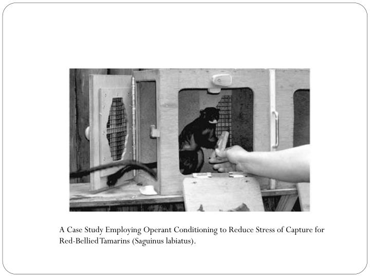 A Case Study Employing Operant Conditioning to Reduce Stress of Capture for Red-Bellied