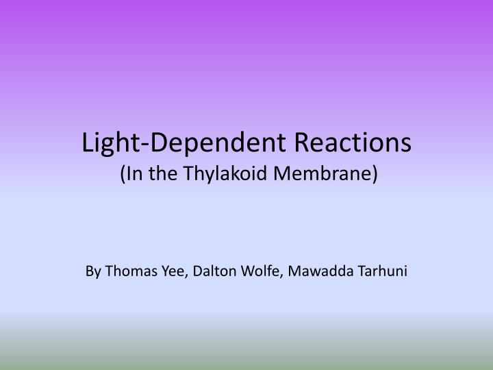 light dependent reactions in the thylakoid membrane n.