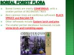 boreal forest flora
