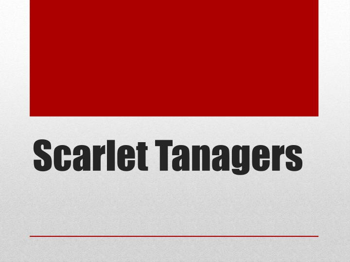 scarlet tanagers n.