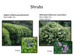 shrubs1