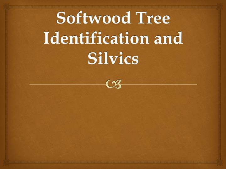 softwood tree identification and silvics n.