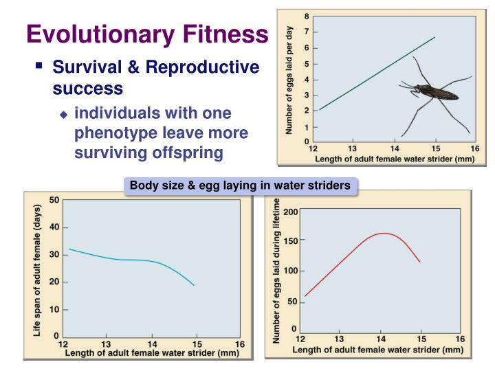 Evolutionary Fitness