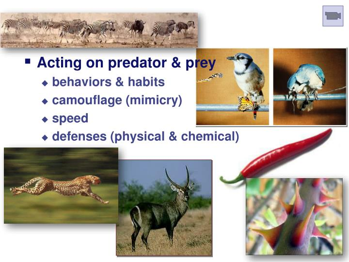 Predation Selection