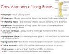 gross anatomy of long bones