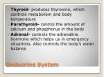 endocrine system2