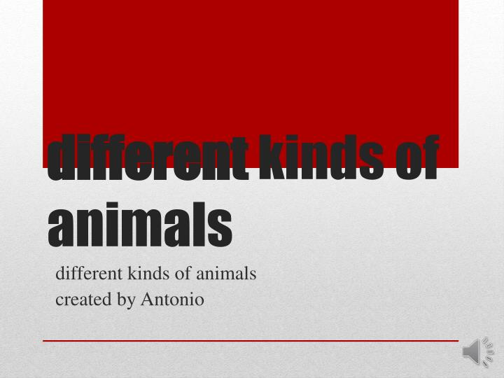 different kinds of animals n.