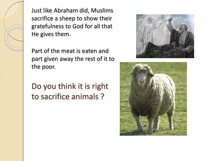 Just like Abraham did, Muslims sacrifice a sheep to show their gratefulness to God for all that He gives them.