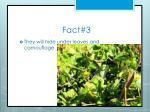 fact 3