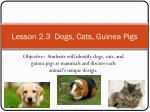 lesson 2 3 dogs cats guinea pigs