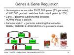 genes gene regulation