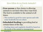 how often do we feeds animals