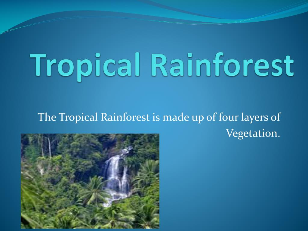 ppt tropical rainforest powerpoint presentation id 2107376