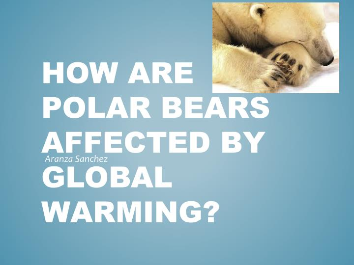 how are polar bears affected by global warming n.