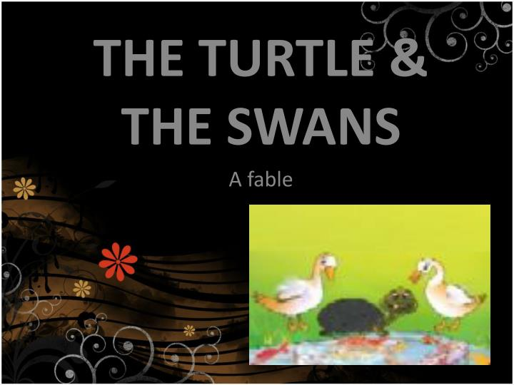 the turtle the swan