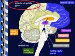 example hypnotic analgesia