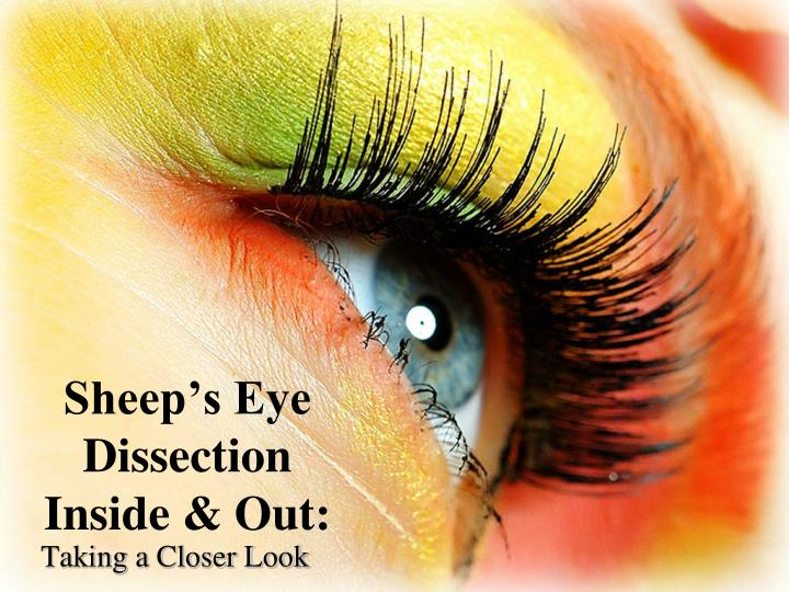 Ppt Sheep S Eye Dissection Inside Out Powerpoint Presentation