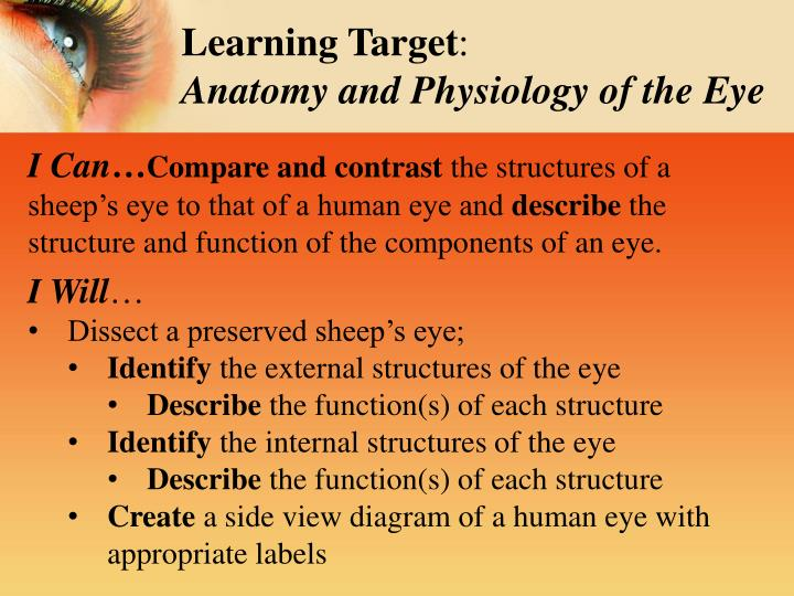 PPT - Sheep\'s Eye Dissection Inside & Out: PowerPoint Presentation ...