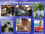 what does a zoologist do