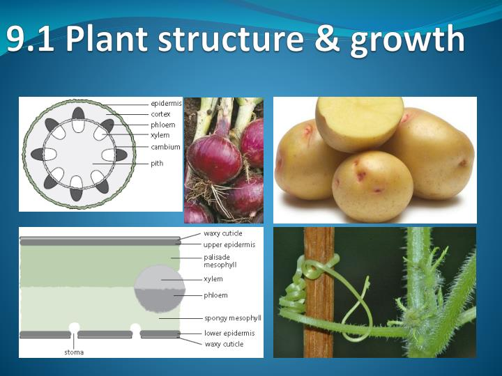 9 1 plant structure growth n.