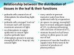 relationship between the distribution of tissues in the leaf their functions1