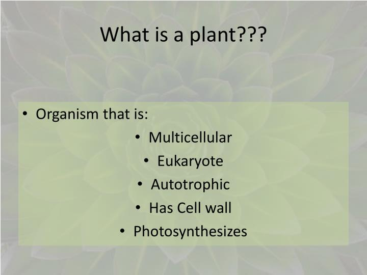 what is a plant n.