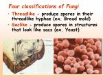 four classifications of fungi