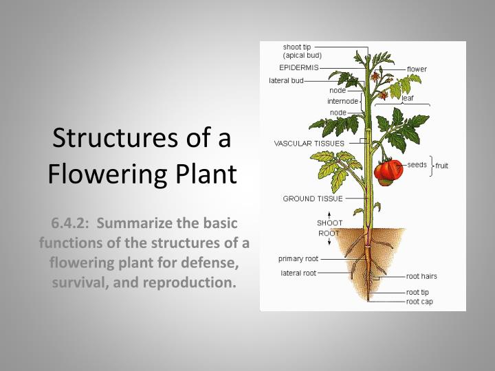 structures of a flowering plant n.