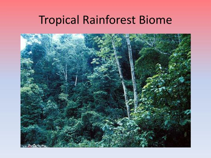 Ppt Savanna And Tropical Rainforest Biomes Powerpoint