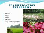 classification kingdom