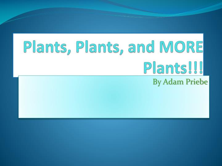 plants plants and more plants n.